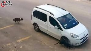 Antalya'da Köpek Ezen Sürücünün Ehliyetine El Konuldu